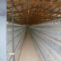 Chicken Farm A type Layer Cages for Sale in Zimbabwe / Chicken House Designs