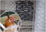 Tela metálica hexagonal de pollo del hierro negro para las plumas del vuelo del pájaro de juego
