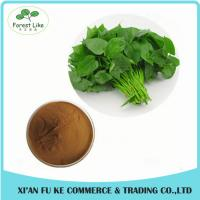 China Organic Sweet Potato Leaf Extract Powder 10:1 for improve Hunman Immunity on sale