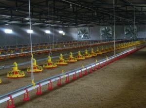 China automaic livestock farming equipment  RC.North-Husbandry on sale
