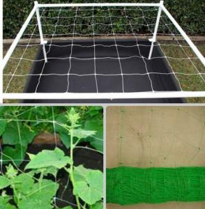 China climbing plant mesh extruded plastic net / plant support netting on sale