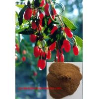 China Goji berry extract(Wolfberry Extracts) on sale
