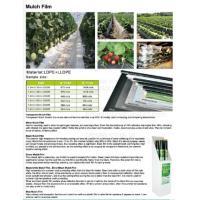 China Mulch film,plant protect sleeve film w/hole,air-breath mulch film,silver,black, green,mulch film, pull-off hole,ldpe+lld on sale