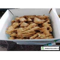 Own Bases Organic Fresh Ginger Storage Temperature 10 °C - 15 °C
