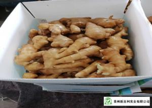 China Own Bases Organic Fresh Ginger Storage Temperature 10 °C - 15 °C on sale