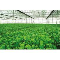 Agriculture Fertilizer Potassium Carbonate K2CO3 Powder Cas 584 08 7