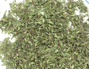 China Thymus quinquecostatus Celak leaf Mongollian Thyme Herb is a spice & herb di jiao ye on sale