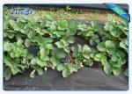 Winter Keep Heat / Fertilizer Agriculture Non Wover Cultivating Seedling Ground Cover