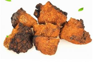 China Inonotus obliquus.Chaga Mushrooms,Hua he kong jun,herb medicine,wild mushrooms,organic food,anti tumor and cancer on sale