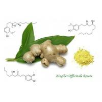 Ginger Root Extract,Zingiber Officinale ,Gingerols 5%,10% 15% 20%,Yellow,Herbal Extract