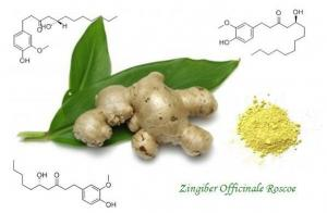 China Ginger Root Extract,Zingiber Officinale ,Gingerols 5%,10% 15% 20%,Yellow,Herbal Extract on sale