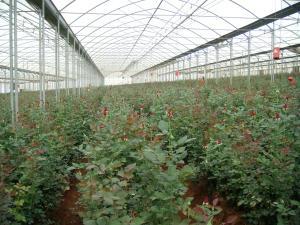 China clear plastic sheet ,max widht 14m ,100um-200um greenhouse film on sale