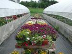 Invernadero de la flor de la agricultura
