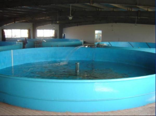Fiberglass Aquarium Tanks - 1000+ Aquarium Ideas