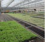 Flower Vegetable Growing Greenhouse Grow Beds Hot Dip Galvanized Stand Material
