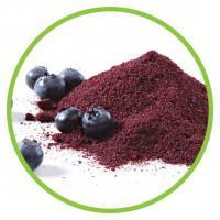 China Blueberry Fruit Powder on sale