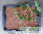 Vermiculite exfoliated dourado de 1-3mm para carcaças do berçário