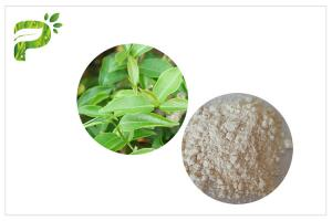 China CAS 989 51 5 EGCG Green Tea Extract Cosmetic Grades Epigallocatechin Gallate Ingredient on sale