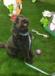 China Dog & Pet artificial synthetic grass on sale