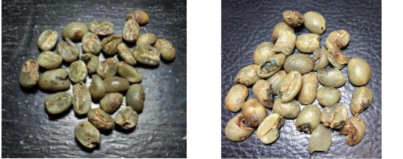 coffee bean processing