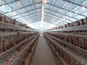 China PVC Down Pipe Poultry Farm Structure Chicken Shed With Grey paint Surface on sale
