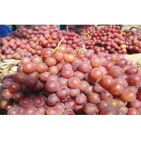 Fresh Sweet White / Green Seedless Grapes With Catechins , Micronutrient Minerals