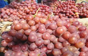 China Nutritious Black / Red Globe Grapes Cotaining Vitamin E , C Preventing CHD, Tender and juicy, Hardness on sale