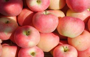 China Natural Seasonable Fresh Organic Fuji Apple Vitamin C , Zinc Anti-Cancer, fruit extremely resistant storage on sale