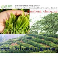 China buy green tea: 2015New Chinese Organic Green Tea-Hanzhong Chaoqing Third Grade on sale