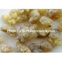 China Boswellia Extract Powder, Boswellic Acid 65% Titration, 5:1,Off-white Powder, Chinese manufacturer, Shaanxi Yongyuan Bio on sale