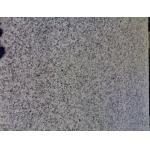 O granito cinzento chinês G640 da certificação da qualidade lustrou o preço de pedra cinzento de /riser /Step da escada G640