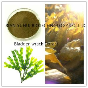 China 100% natural bladderwrack extract ,0.3%iodine,0.2% Iodine, 5% iodine on sale