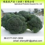 brócolos frescos