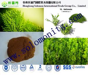 China manufacture Seaweed extract fertilizer powder and flake liquid --Kelp extract on sale