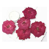 True Rose Flower Dried Pressed Flowers For Pendant Necklace Jewelry Ornaments Material