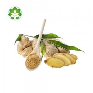 China natural health ginger root extract powder manufacturers in china on sale