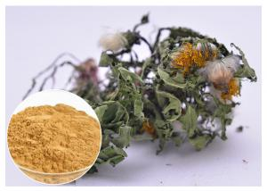 China Lower Blood Pressure Herbal Plant Extract Flavones Dandelion Root Extract Powder on sale