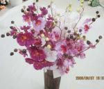 Haste da orquídea de borboleta única