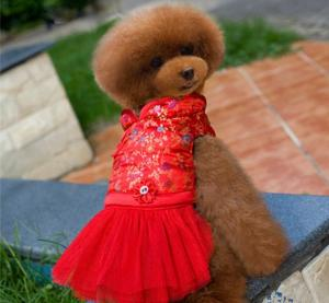 China Red Cute bling Lace medium Pet Dog Cat puppy Clothes dress for party on sale
