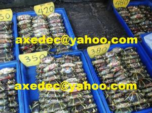 China Live Mud Crabs on sale