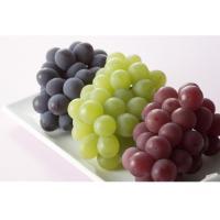 organic grape seed extract powder free samples (Vitis vinifera L)