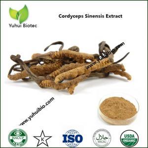 China Caterpillar Fungus Extract,Cordyceptic Acid,Cordyceps Polysaccharides,Cetepiller Mushroom extract on sale