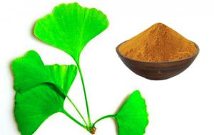 China GACP planting base Pure Ginkgo Extract EP9.0 Standard food grade ethanol solvent on sale