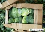 Natural Hue All Season Cabbage 2.5 Kg / Per Helps Improve Digestion