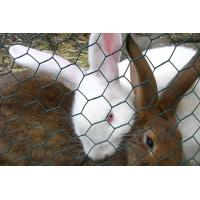 China Metallic Rabbit Wire Netting , Hot - Dip Galvanized Wire Mesh Fencing on sale