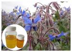 China Natural Extract Borage Oil Liquid Omega 6 , Borage Oil For Skin And Hair Hexane Refining wholesale