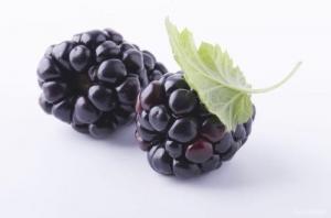 China Edible Organic Food Ingredients Blackberry Extract Powder Phenolic Acids on sale