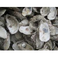 Traditional chinese medicine,Mu Li ke (Concha Ostreae)/Oyster Shell