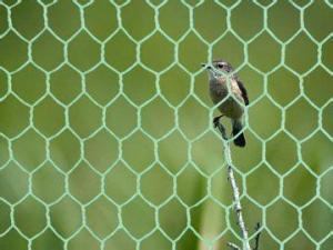 China Tela metálica 20gauge1&quot del pollo/del conejo; las aves de corral de la malla del maleficio cercan la red de las aves de corral on sale