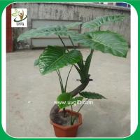 China UVG PLT11 faux plants small alocasia macrorrhizos bonsai for living room landscaping on sale